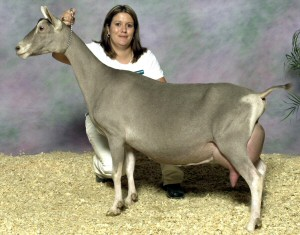 ch-welbian-farms-whins-madison-ex93.jpg